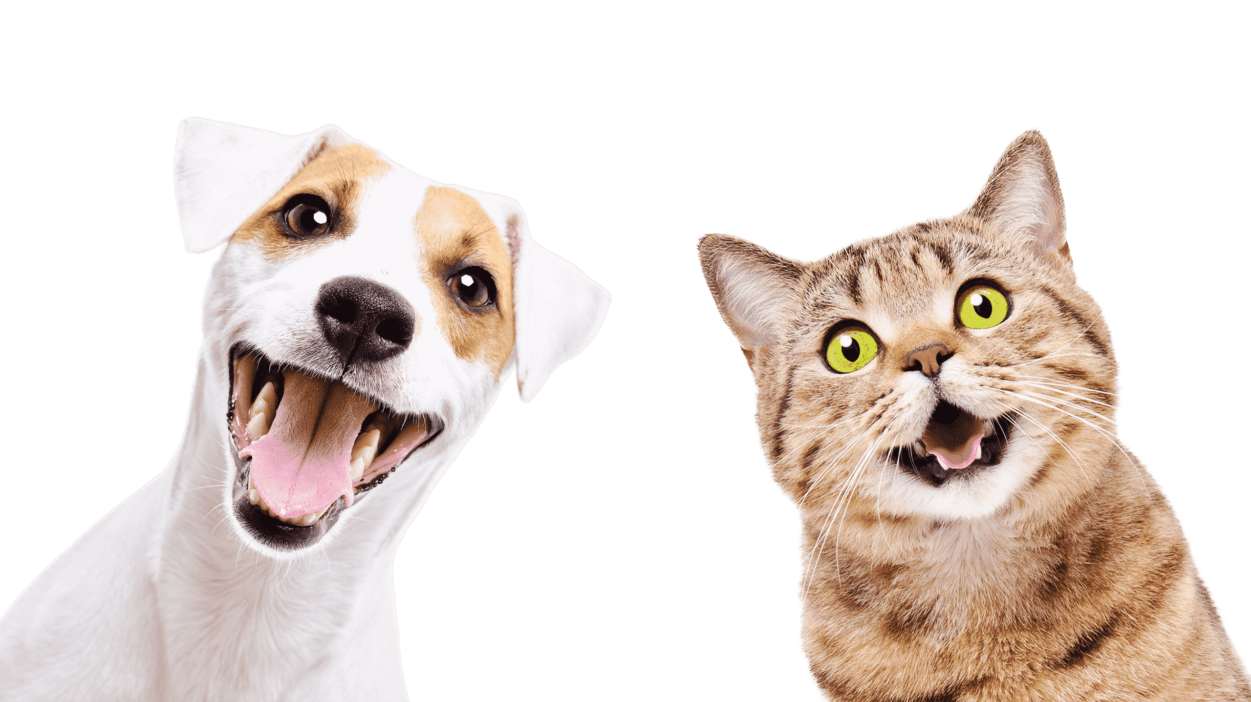 Hund Katze Banner