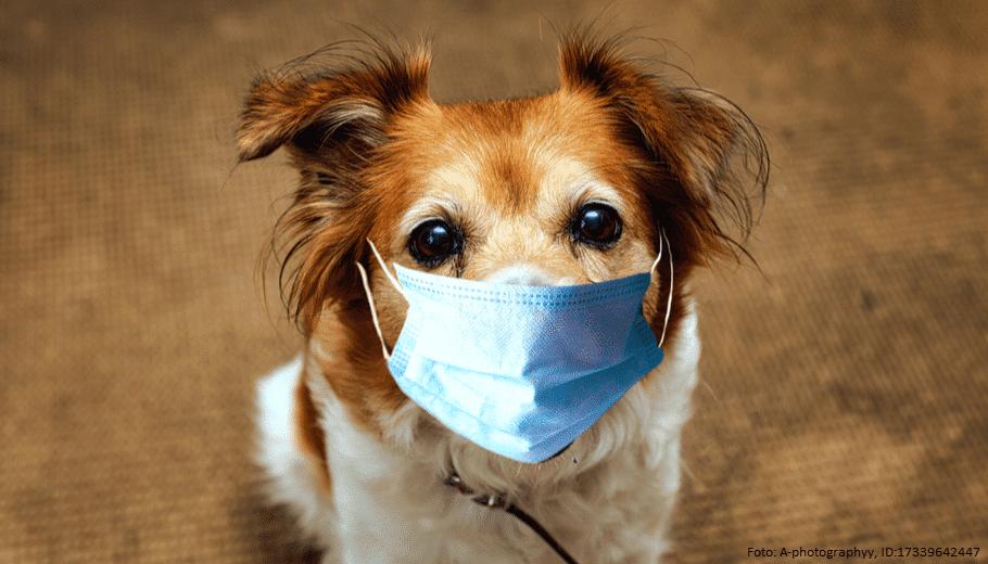 Hund mit Maske
