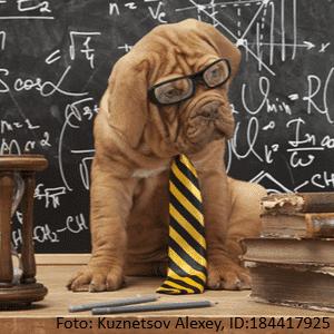 french mastiff im klassenzimmer