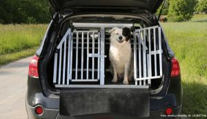 hund in seiner autobox