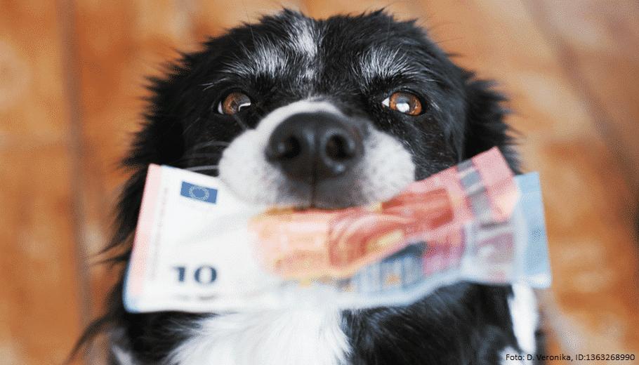 hund mit Geldscheinen im Maul