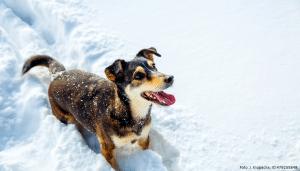 hund mit pfoten im schnee 1