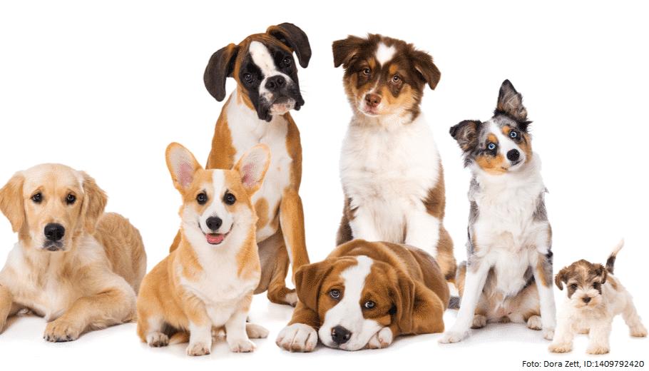 lebenserwartung hundewelpen 1