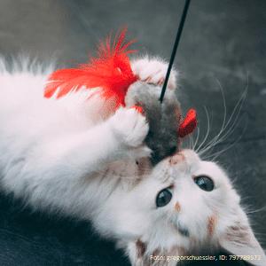 Babykatze spielt mit einer Spielzeugmaus
