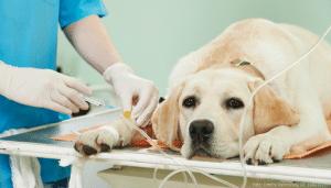 hundekrankenversicherung hund wird geimpft