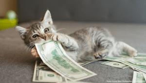 katze mit geld