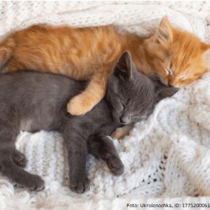 zwei katzen schlafen nebeneinander