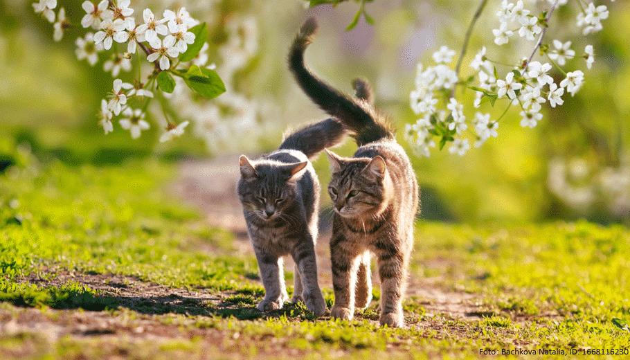 zwei katzen zusammenfuehren